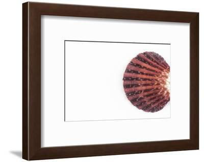 So Pure Collection - Sea Shell Clam-Philippe Hugonnard-Framed Photographic Print