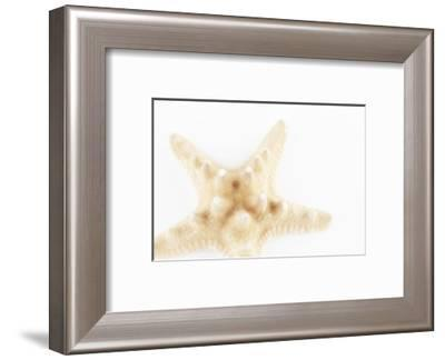 So Pure Collection - Seashell Star II-Philippe Hugonnard-Framed Photographic Print