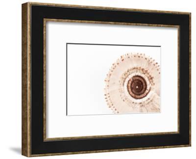 So Pure Collection - Swirl Sundial Sea Shell III-Philippe Hugonnard-Framed Photographic Print