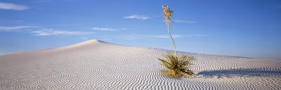Soaptree Yucca, White Sands National Monument, New Mexico, USA--Photographic Print