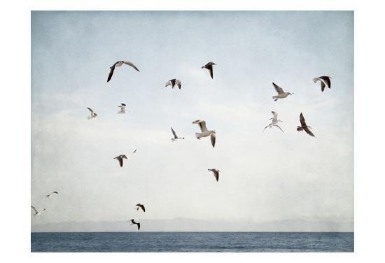 Soar I-Elizabeth Urquhart-Art Print