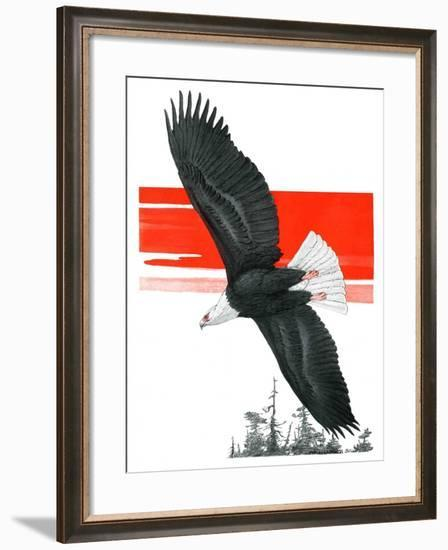 """Soaring Eagle,""March 22, 1924-Charles Bull-Framed Giclee Print"
