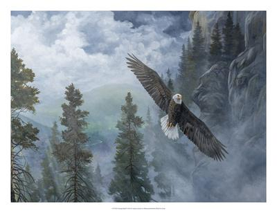 https://imgc.artprintimages.com/img/print/soaring-high-ii_u-l-f8hrwj0.jpg?p=0