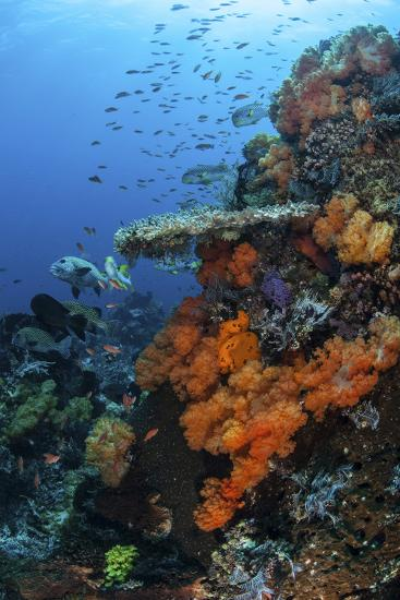 Soft and Hard Corals Grow on a Healthy Reef in Indonesia-Stocktrek Images-Photographic Print