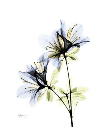 https://imgc.artprintimages.com/img/print/soft-azalea-portrait_u-l-pyk0540.jpg?p=0