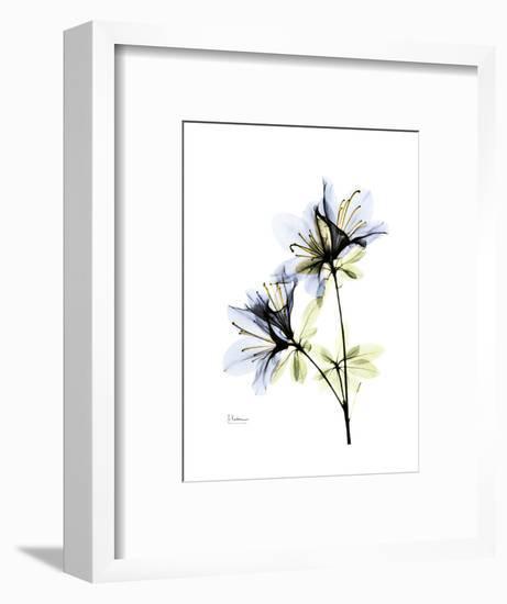 Soft Azalea Portrait-Albert Koetsier-Framed Premium Giclee Print