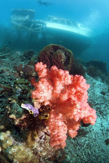 Soft Coral And Sea Squirts-Georgette Douwma-Photographic Print