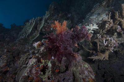 Soft Coral on a Healthy Fijian Reef-Stocktrek Images-Photographic Print