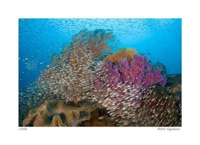 Soft Corals and Glassfish-Jones-Shimlock-Giclee Print