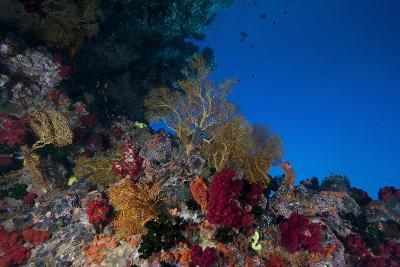 Soft Corals and Gorgonian Sea Fans Adorn a Reef in Fiji-Stocktrek Images-Photographic Print