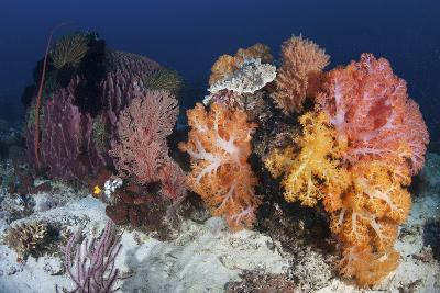 Soft Corals and Invertebrates on a Beautiful Reef in Indonesia-Stocktrek Images-Photographic Print