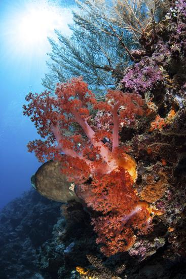 Soft Corals and Other Invertebrates Grow on a Reef in Indonesia-Stocktrek Images-Photographic Print