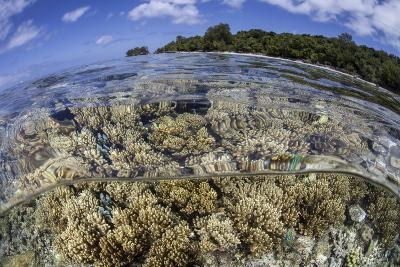 Soft Corals Grow on the Edge of Palau's Barrier Reef-Stocktrek Images-Photographic Print