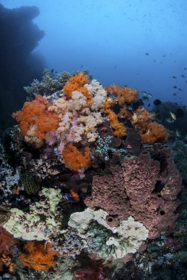 Soft Corals, Sponges, and Other Invertebrates on a Reef in Indonesia-Stocktrek Images-Photographic Print