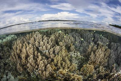 Soft Corals Thrive on a Healthy Reef in the Solomon Islands-Stocktrek Images-Photographic Print
