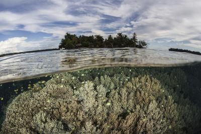 Soft Corals Thrive on a Reef in the Solomon Islands-Stocktrek Images-Photographic Print