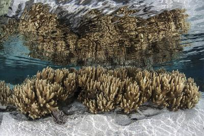 Soft Leather Corals Grow in the Shallow Waters in the Solomon Islands-Stocktrek Images-Photographic Print