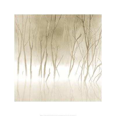https://imgc.artprintimages.com/img/print/soft-light-ii_u-l-f13sb00.jpg?p=0