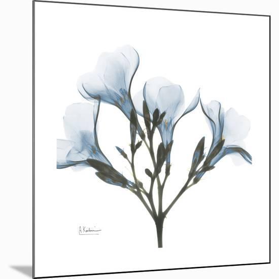 Soft Oleander-Albert Koetsier-Mounted Premium Giclee Print