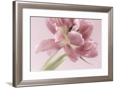 Soft Pink Tulip-Cora Niele-Framed Photographic Print