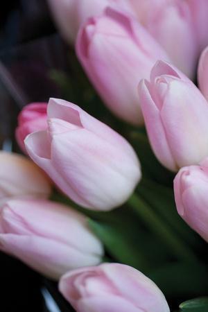 https://imgc.artprintimages.com/img/print/soft-pink-tulips-1_u-l-q10pml40.jpg?p=0