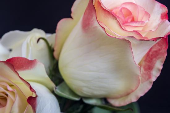 Soft Pink-Bob Rouse-Photographic Print