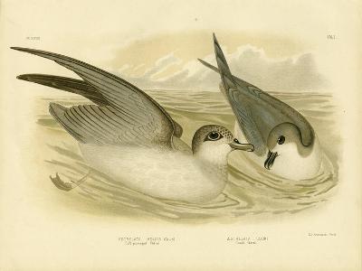 Soft-Plumaged Petrel, 1891-Gracius Broinowski-Giclee Print