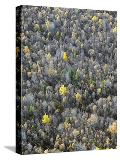Soft Trees-Dale MacMillan-Stretched Canvas Print