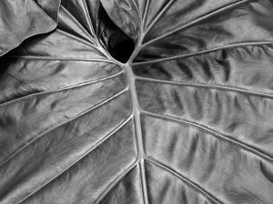 Big Leaf 02 by SOIL