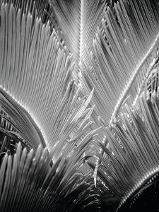 Tropic Tree 03 by SOIL