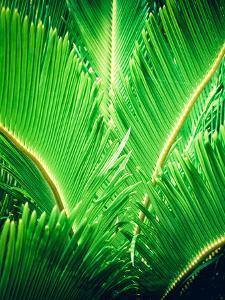 Tropic Tree by SOIL