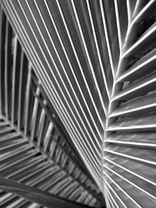 Tropical Close Up 02 by SOIL