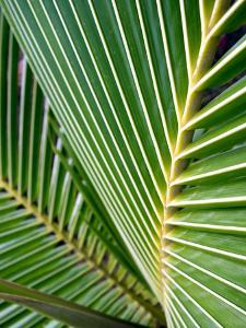 Tropical Close Up by SOIL