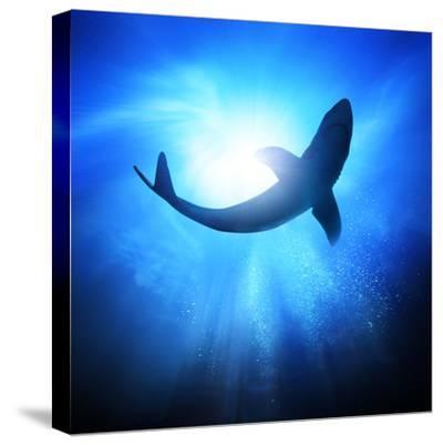 Deep Under The Ocean, Looking Up Towards A Shark