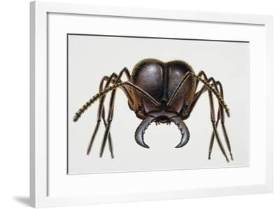 Soldier Ant, Formicidae, Artwork by Mike Atkinson--Framed Giclee Print