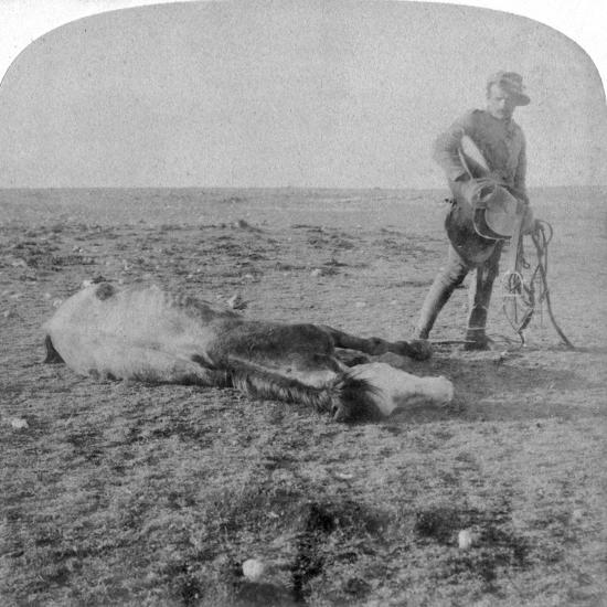 Soldier Leaving His Dead Horse on the March to Bloemfontein, South Africa, Boer War, 1901-Underwood & Underwood-Giclee Print