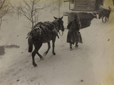 Soldier with Mule in the Valley Doblar During the First World War-Luigi Verdi-Photographic Print
