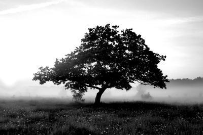 https://imgc.artprintimages.com/img/print/solemn-tree_u-l-q10warq0.jpg?p=0