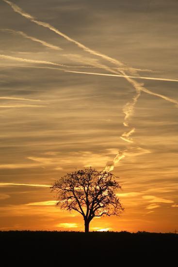 Solitaire-Tree, Silhouette, Sunset, Nature, Tree-Ronald Wittek-Photographic Print