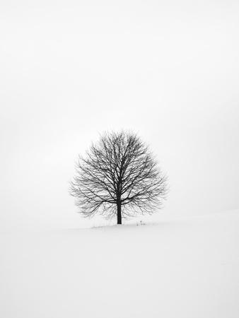 https://imgc.artprintimages.com/img/print/solitary-1_u-l-q1g61iv0.jpg?p=0