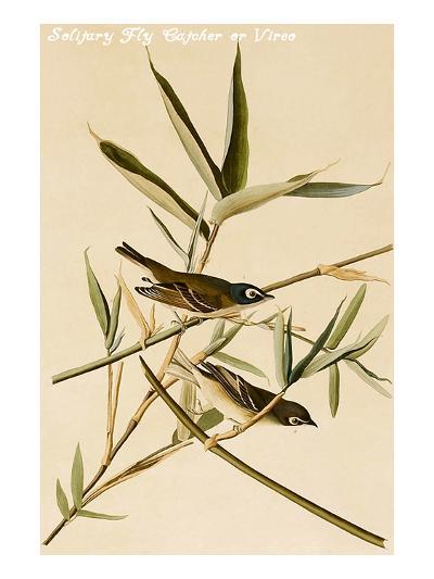 Solitary Fly Catcher or Vireo-John James Audubon-Art Print