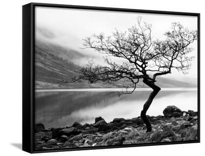 Solitary Tree on the Shore of Loch Etive, Highlands, Scotland, UK-Nadia Isakova-Framed Art Print