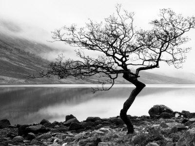 https://imgc.artprintimages.com/img/print/solitary-tree-on-the-shore-of-loch-etive-highlands-scotland-uk_u-l-pxsq1i0.jpg?p=0