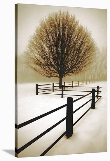 Solitude-David Lorenz Winston-Stretched Canvas Print
