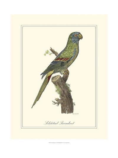 Solstitial Parrakeet-George Edwards-Art Print