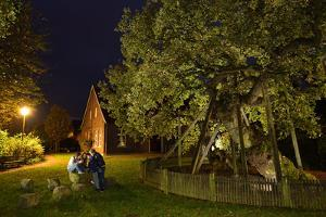 Femeiche' the Court Tree at Night by Solvin Zankl