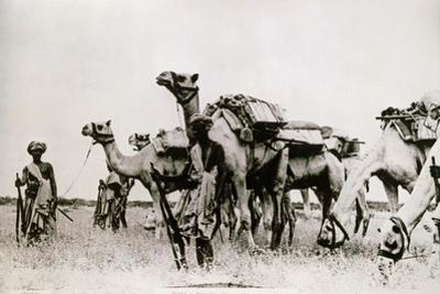 Somali Troops