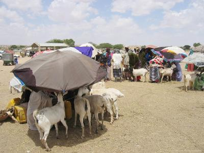 Somaliland Women with Their Goats Protect Themselves from Hot Sun with Umbrellas-Sayyid Azim-Photographic Print