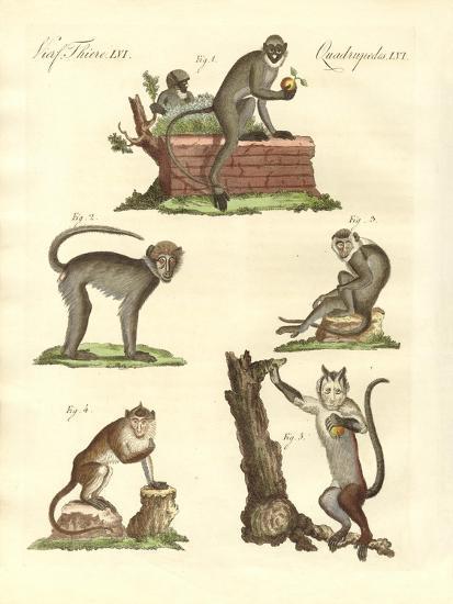 Some Kinds of Monkeys--Giclee Print