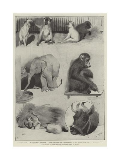 Some Members of the Barnum and Bailey Menagerie at Olympia-Cecil Aldin-Giclee Print